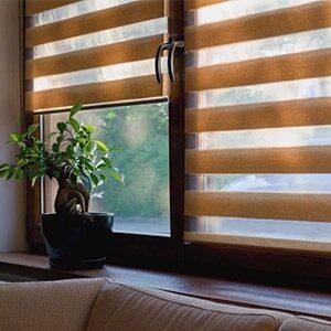 bonsai-innova-min